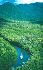 Cape Tribulation and Daintree Mangrove Cruises